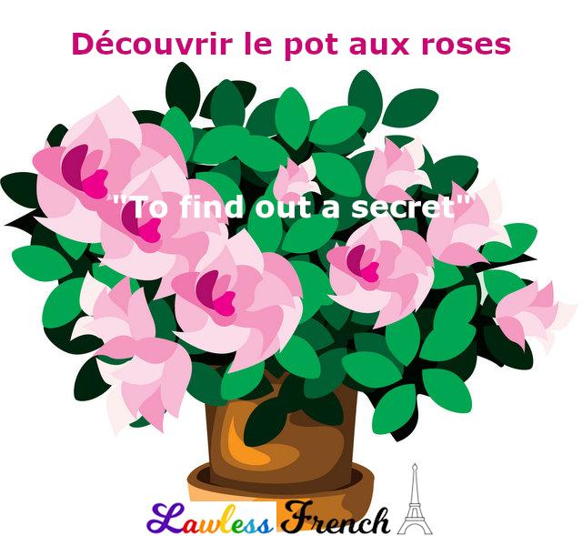 Découvrir le pot aux roses