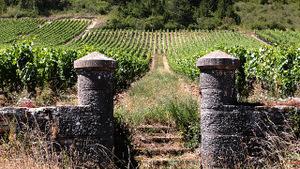 La fête de la Saint-Vincent et des vignerons en France