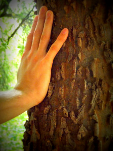 Je touche du bois